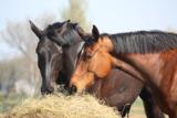 Quickscan Horse Feed_