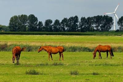 Horse Soil Scan