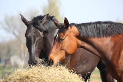 Quickscan Horse Feed